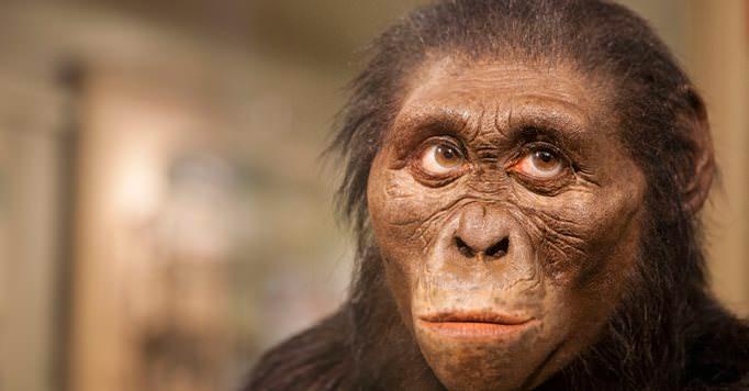 lucy-ape